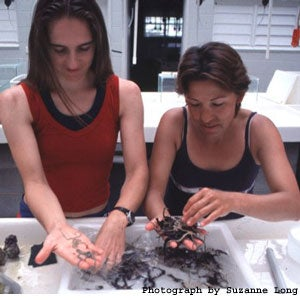 Female Marine biologists working with sea worms. Photograph by Suzanne Long