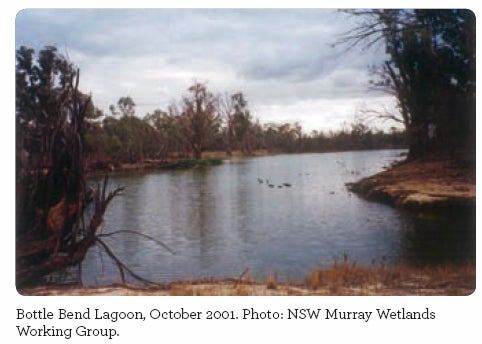 Bottle Bend Lagoon, October 2001. Photo: NSW Murray Wetlands Working Group.