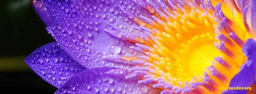 Purple flower with text 'IntersexDay.org '