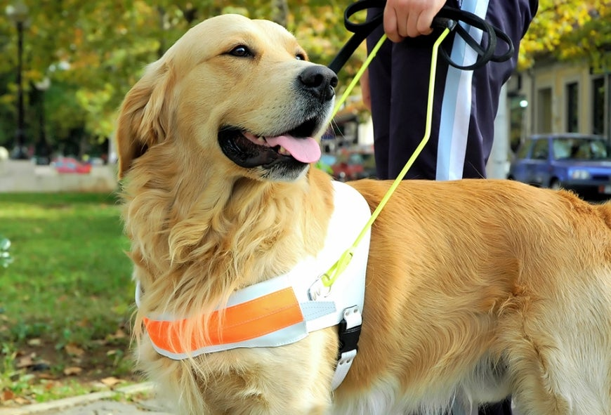 Assistance animals and the Disability Discrimination Act