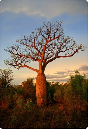 Photo: mighty tree